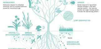 Plant-fungi interactions