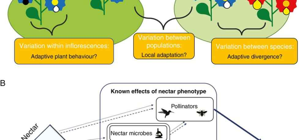 Conceptual diagram for sources of nectar variation