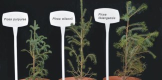 Seedlings of the species used in this study