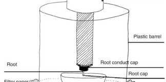 Sketch of the gadget for measuring mass (in grams) of roots of 3-day-old maize seedlings towards horizontal obstacles