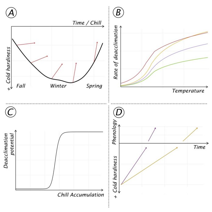 Deacclimation kinetics of Vitis species