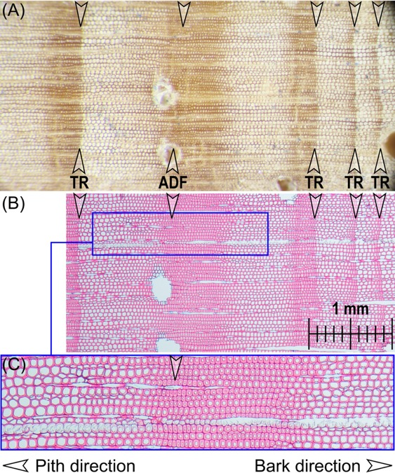 Microscopy images used in tree ring analyses