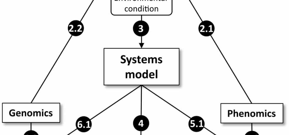A systems model