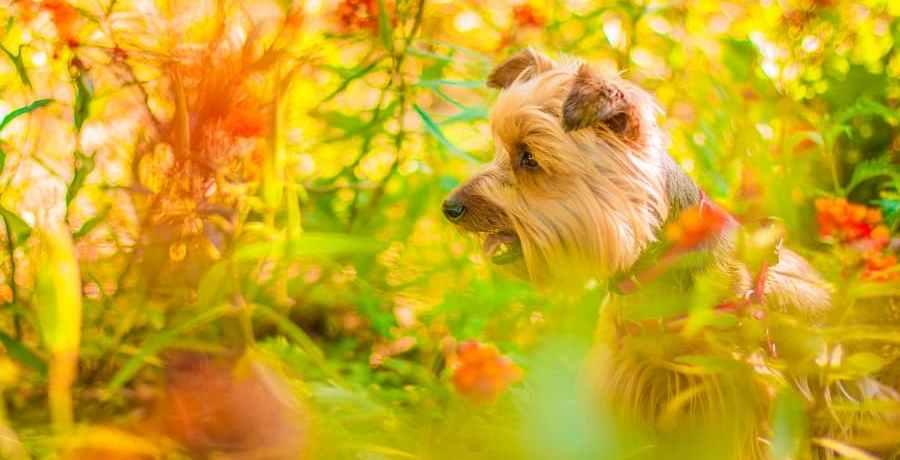 Dog admiring plant