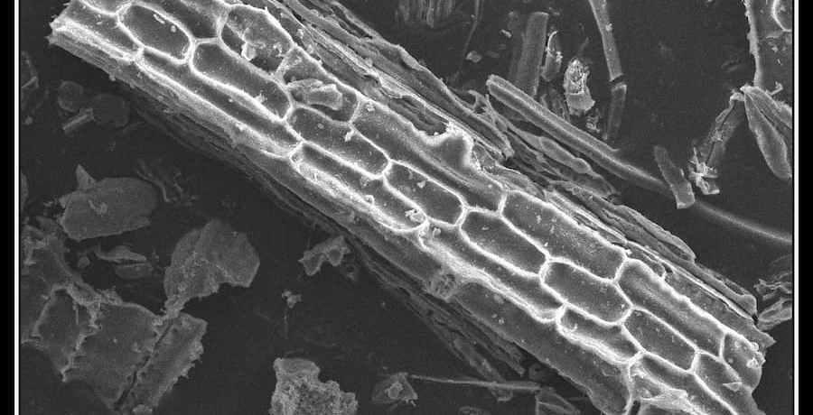 Phytolith