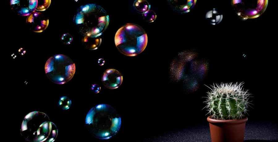 A cactus bursting bubbles