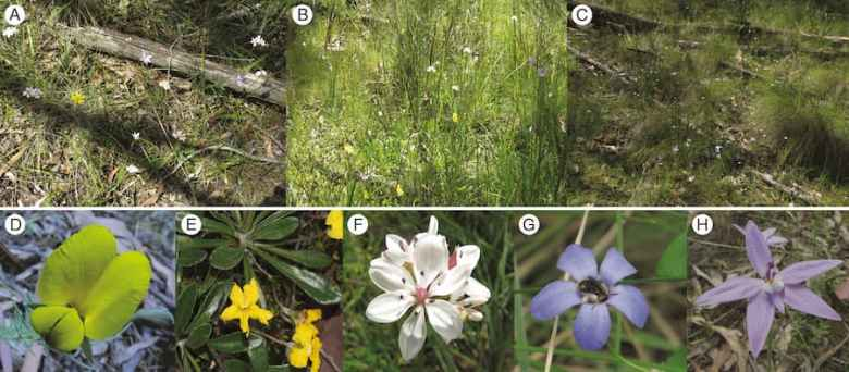 Examples of habitat and representative herbaceous species at the study sites.