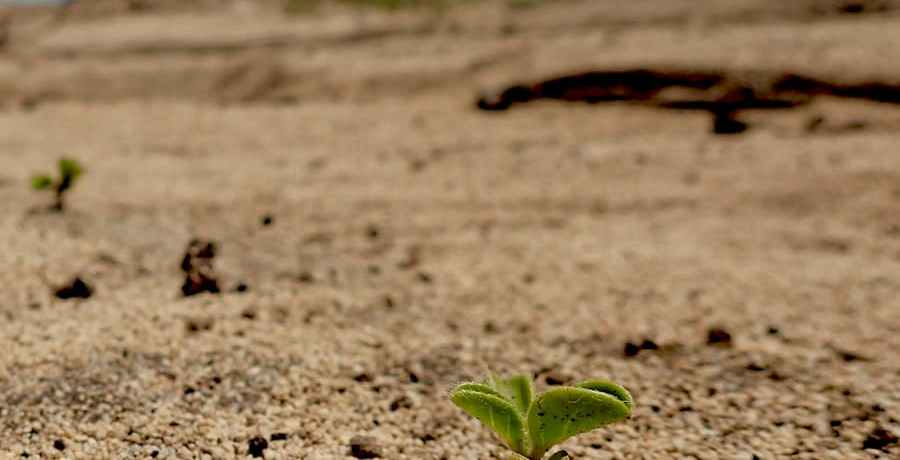 A seedling on the coast