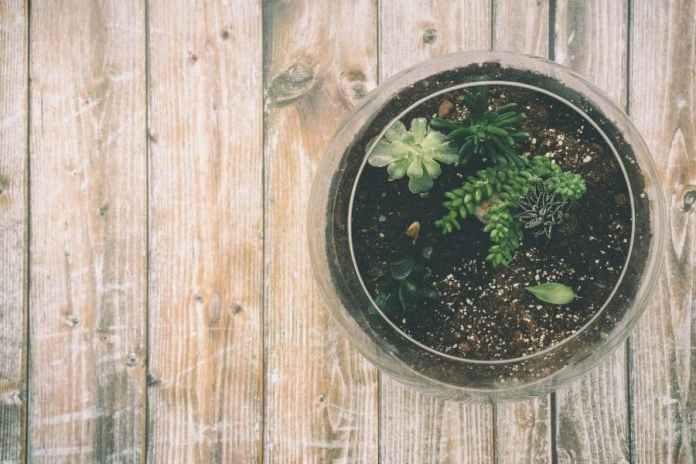 A terrarium as a habitat