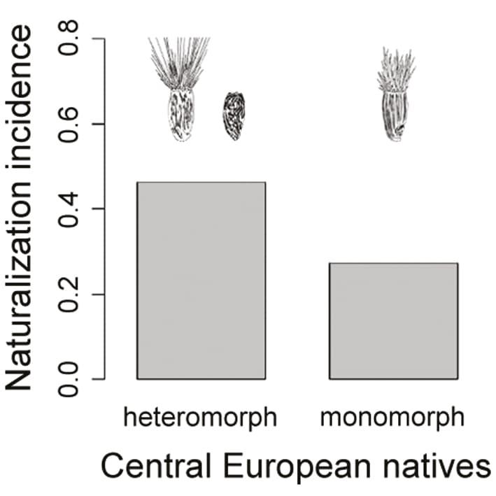 Graph of heteromorph and monomorph naturalization