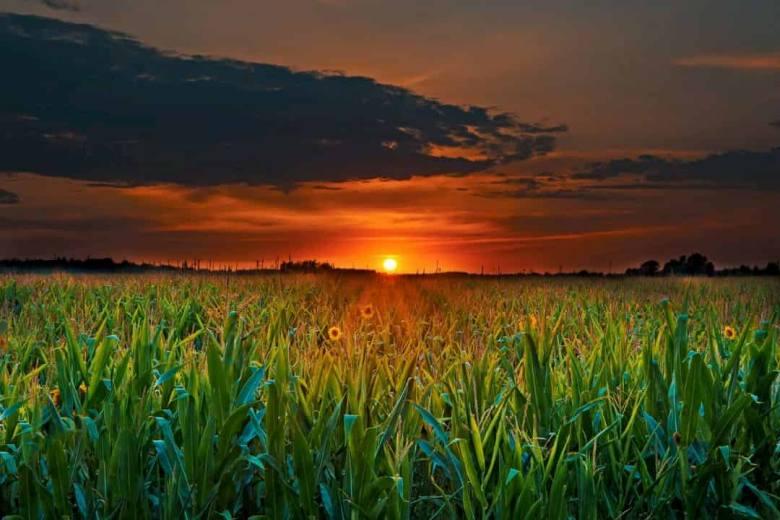 Crops under the sun