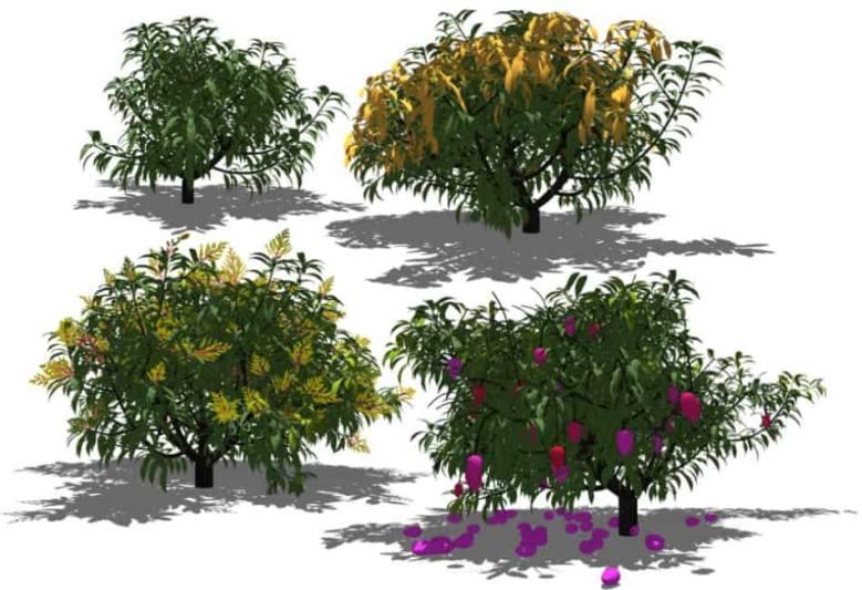 Increasingly bushy computerised mango trees