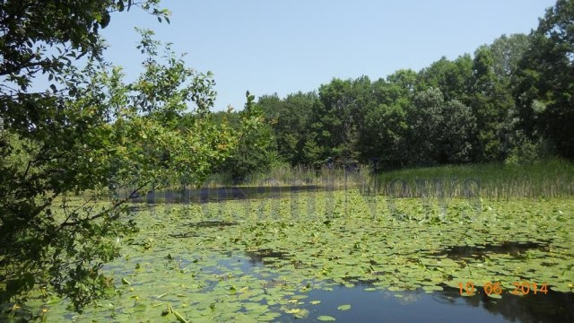 lacul cu nuferi ipotesti- Botosani