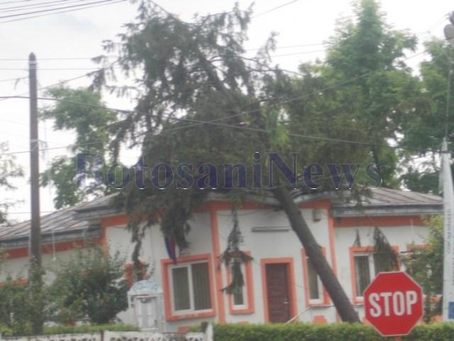 copac cazut peste postul de politie din Hanesti- Botosani