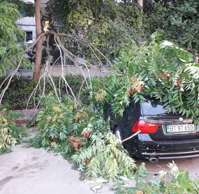masini afectate de un copac rupt- botosani