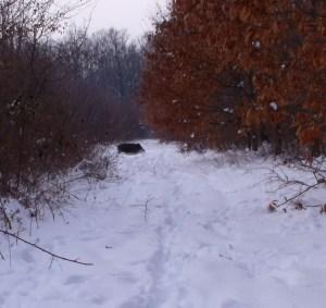 mistret iarna, stiri, botosani