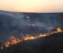 incendiu vegetatie, nicseni, stiri, botosani (2)