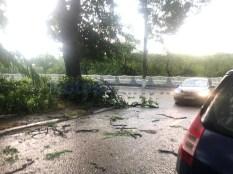 furtuna, vijelie, tornada, pomarla, cod, acoperis luat de vant, copaci rupti (19)