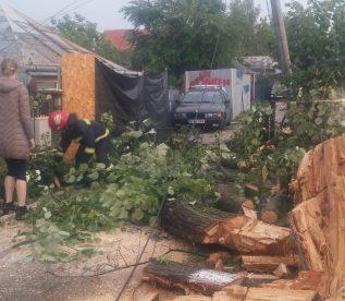 copaci rupti de furtuna (1)