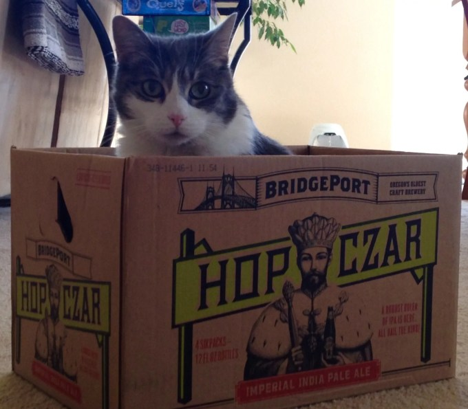 Gracie, the beer cat. Though she enjoys the boxes more than the brew.