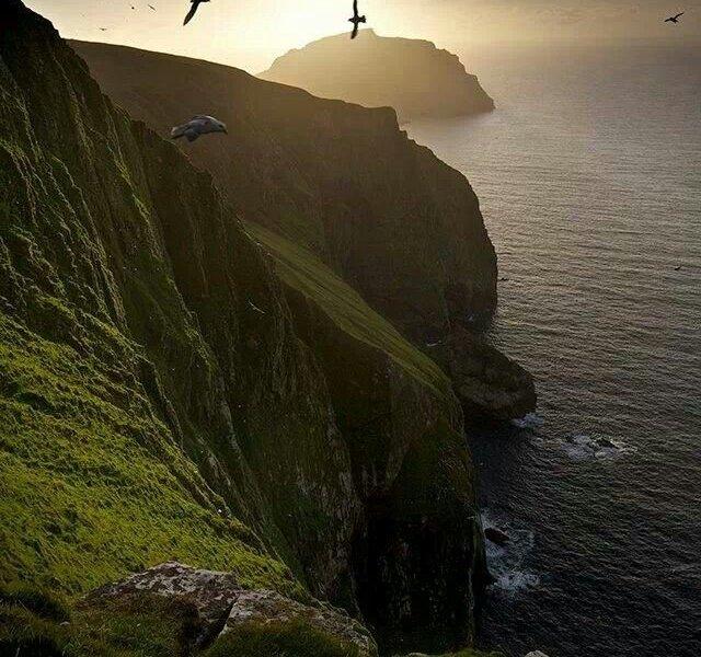 madarak észak Sky sziget
