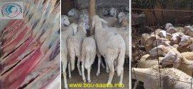 جمعية كافل نسعد ابنائها وتوزع الأضحية واللحم