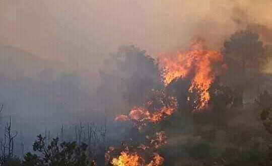 تواصل اخماد حريق على مستوى غابة الزعفرانية بمنطقة جبل مغنية