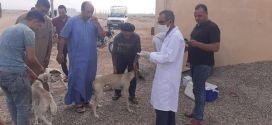 حملة تطوعية وتوعويةلفائدة مربي الكلاب داخل المستثمرات وكلاب الحراسة وكلاب الصيد