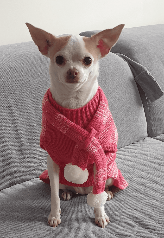 Read more about the article CHIHUAHUA