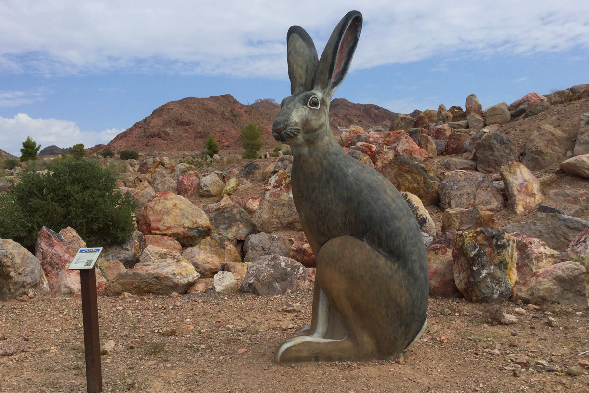 Boulder City S Nature Discovery Trail And Rock Garden