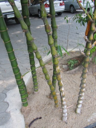 Impressions of Chiang Mai - Bamboo