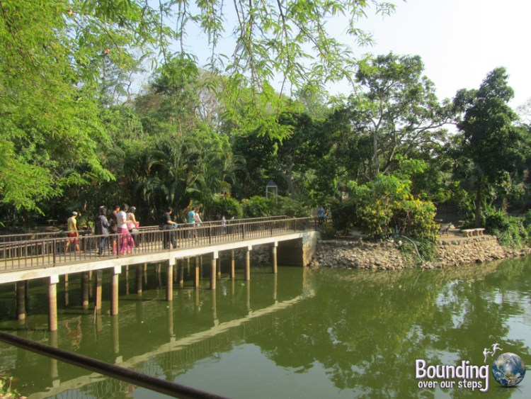 The turtle pond at Wat Umong in Chiang Mai, Thailand