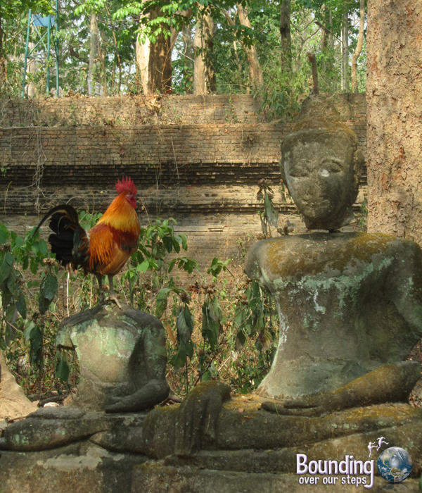 A rooster among the Buddha statues in Wat Umong in Chiang Mai, Thailand