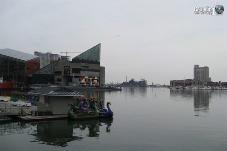 What I Miss About Baltimore - Aquarium