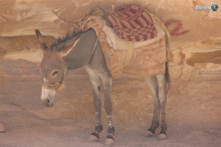 A sad and dejected looking donkey at Petra