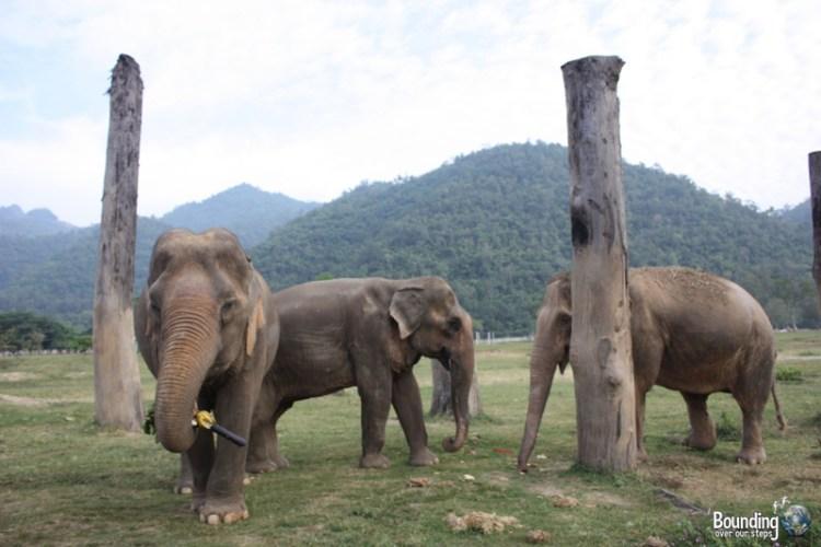 Elephants in the Tree Shrine at Elephant Nature Park