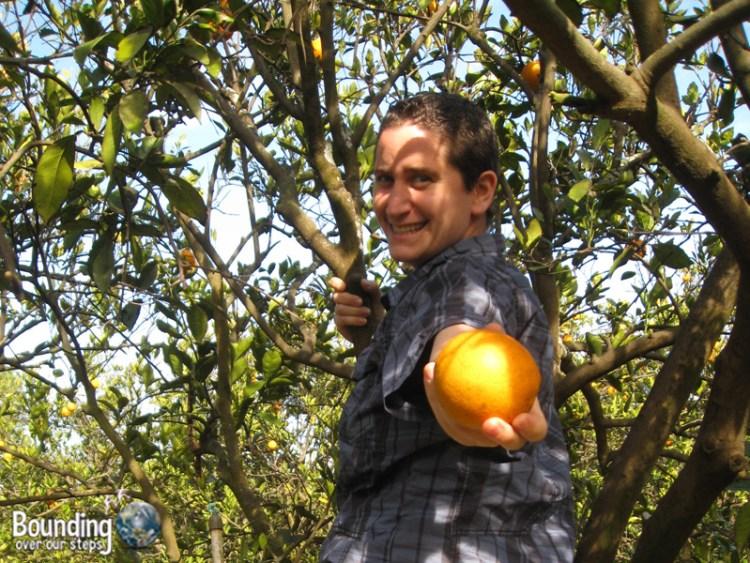 Miss About Florida - Citrus Fruit