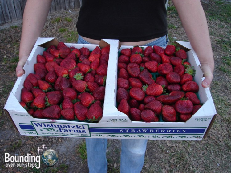 Miss About Florida - Strawberry Festival