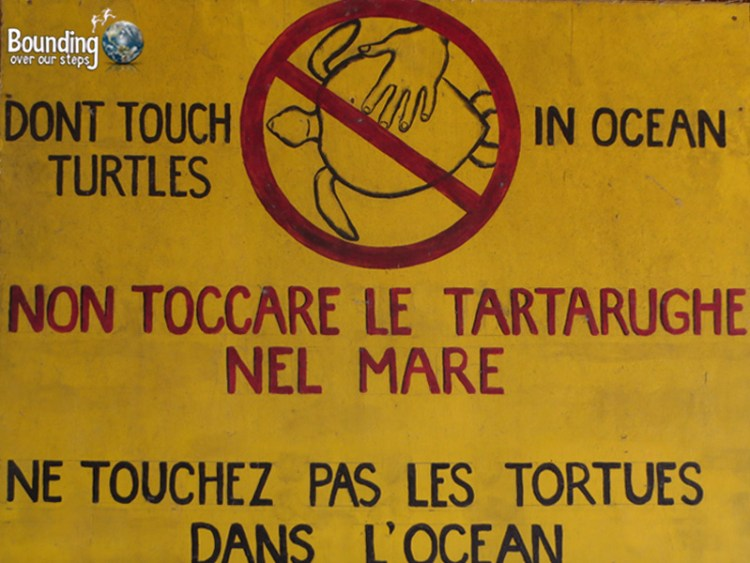 Sea Turtles - Gili Trawangan, Indonesia - Don't Touch Turtles