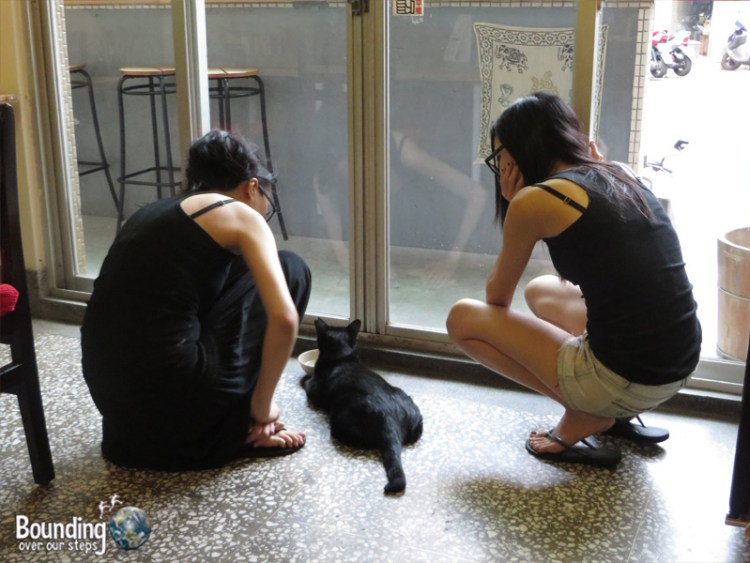 About Animals Vegan Restaurant - Helping Stray Cat