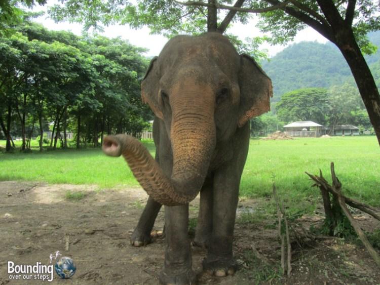 Elephant Lesbians - Tilly and Mae Kham Puan - Meet Mae Kham Puan