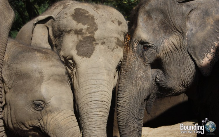 Goodbye to Elephants - Dao Tong Rescue