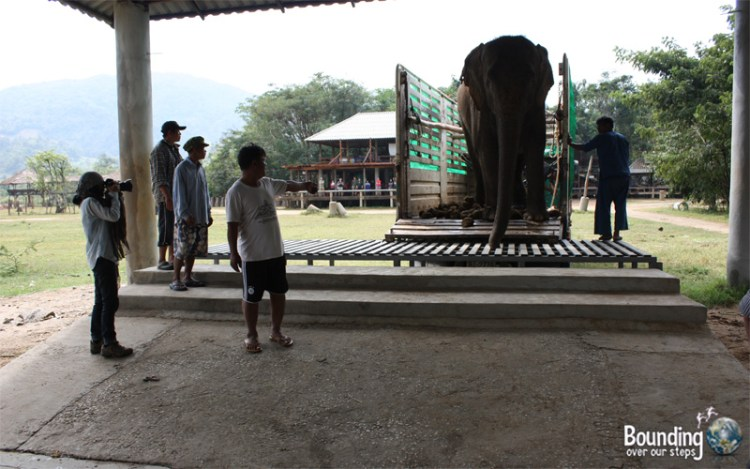 Goodbye to Elephants - Lucky Rescue