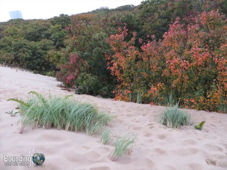 Provincetown Sand Dunes - Leaves