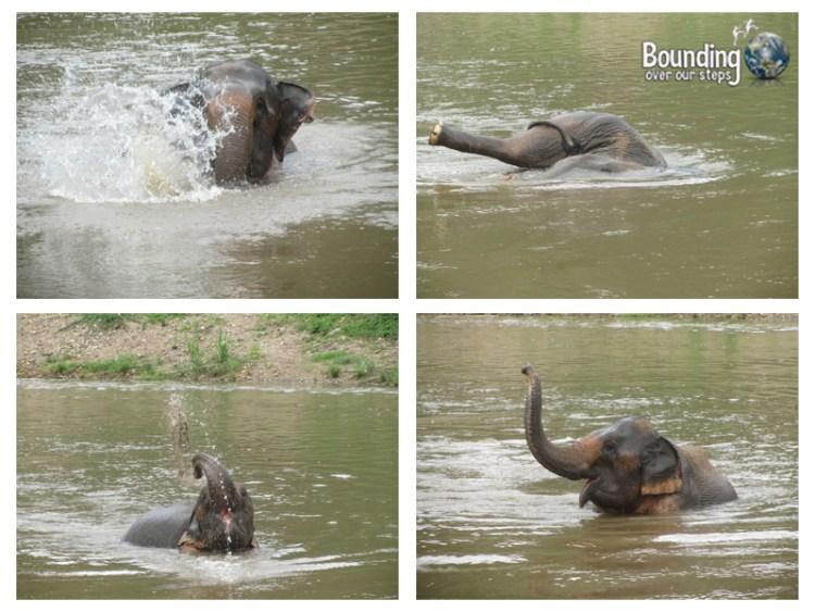Goodbye to Elephants - Thai Koon River