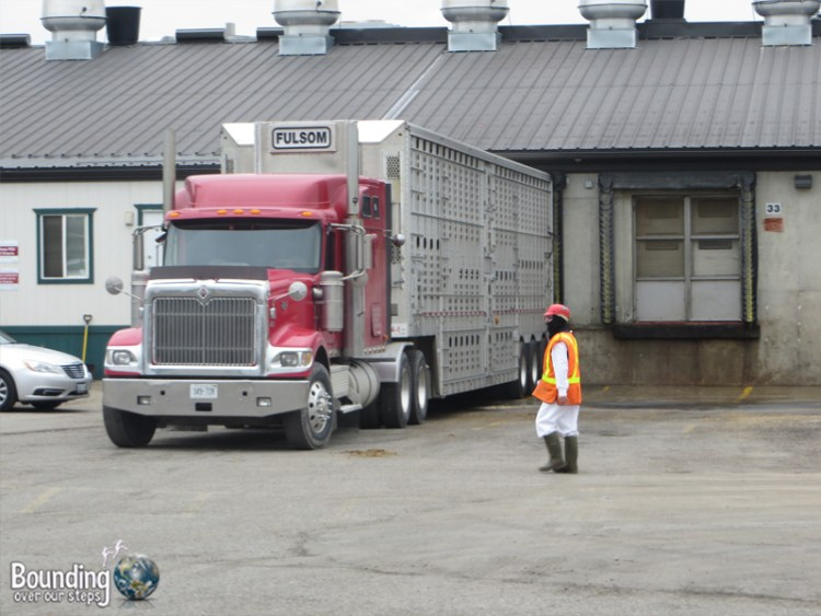 Visiting a Slaughterhouse - Truck