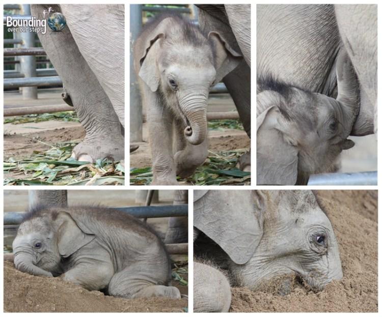 Goodbye to Elephants - Baby Yindee
