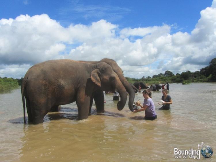 Surin Project - Elephant Bath