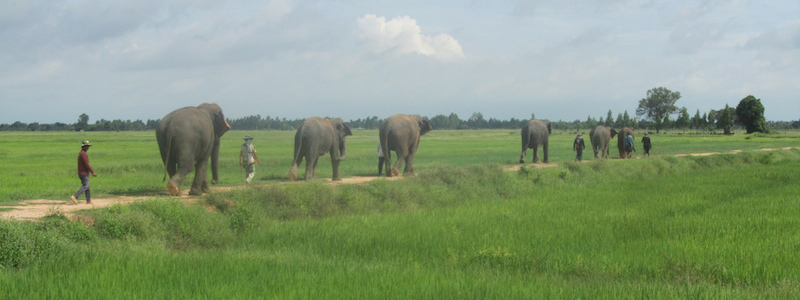 Surin Project - Mahout Featured