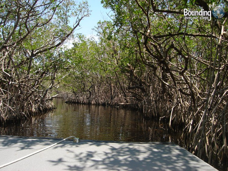 Water Activities in Florida - Everglades Mangroves